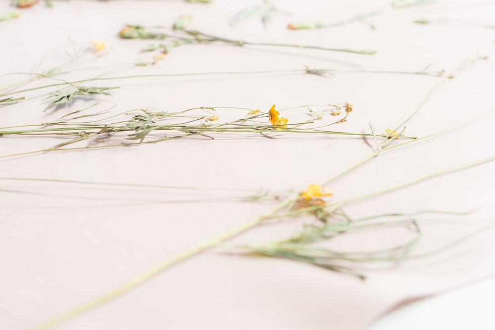 carina-about-flower1-_JL13255.jpg