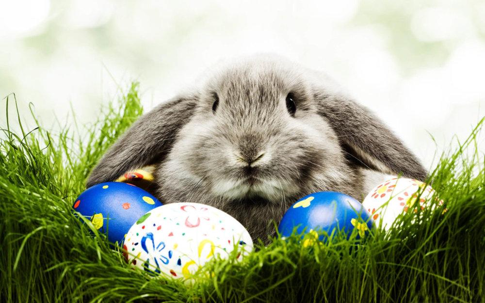 - Easter Bunny Photos