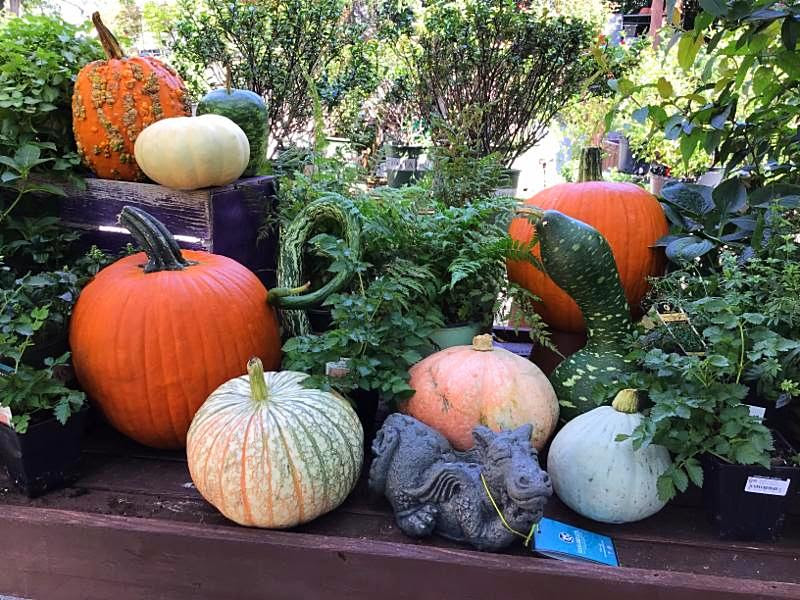 Pumpkins have arrived! - And not just your ordinary pumpkins. We have gourds in every shape, color, and size.