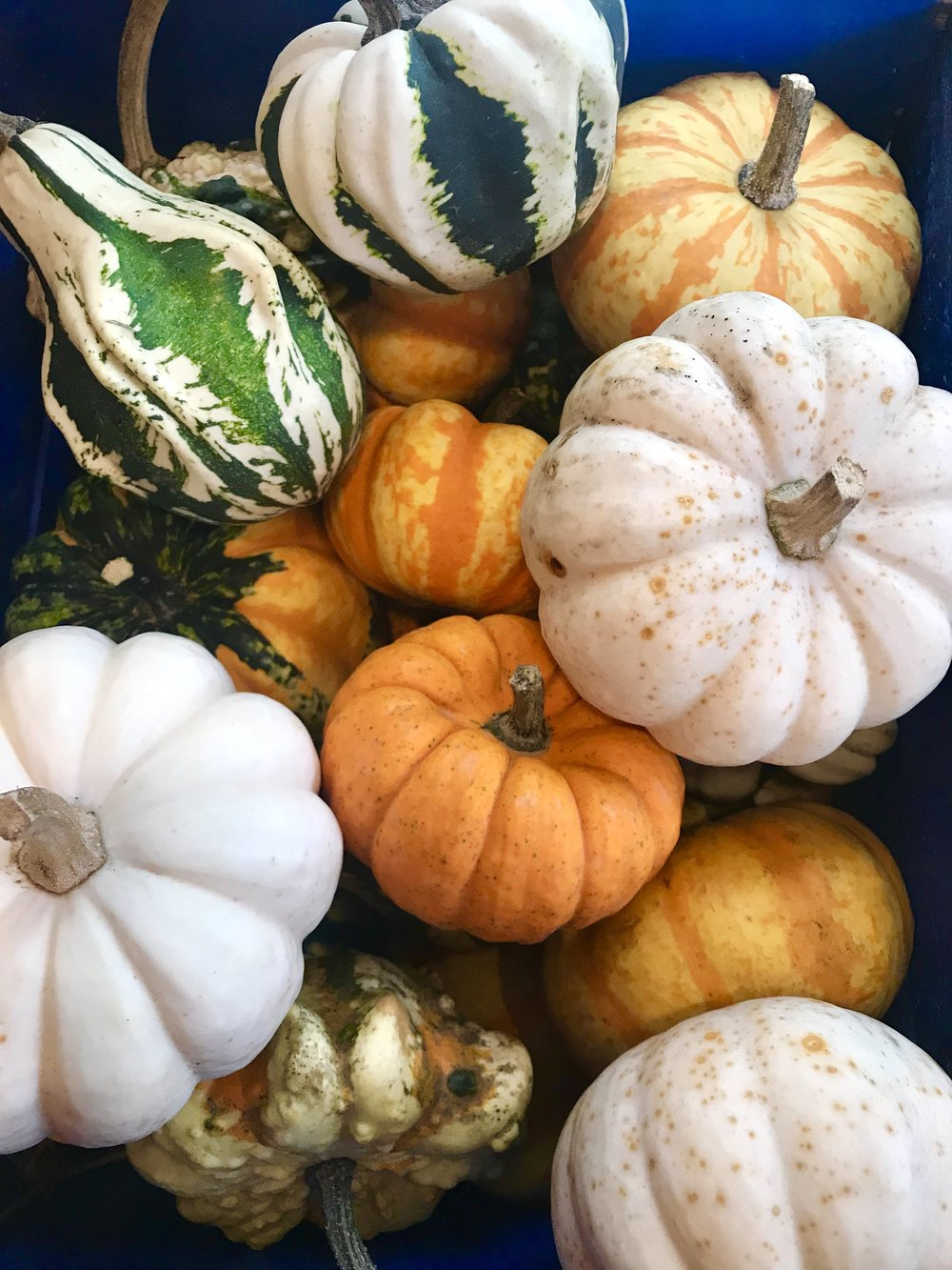 Mini pumpkins & gourds are here! - 3 for $2! Snag some mini pumpkins to put around your home! The cutest addition to your fall table or porch!