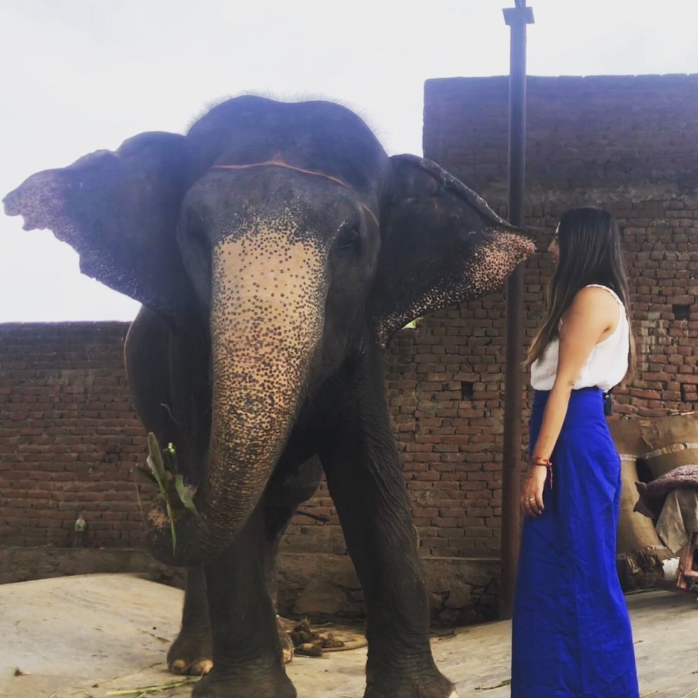 Feeding Mala The Elephant - Elephant Farm