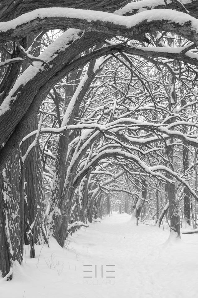 Osage Tunnel In Snow by Elle Pollard 2019