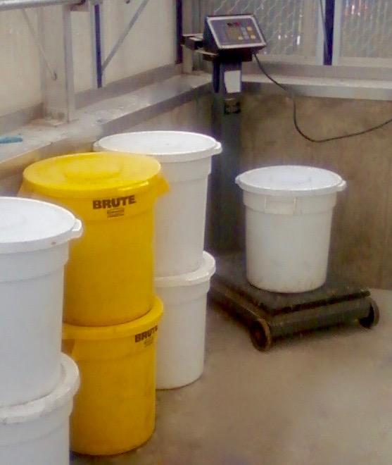 Weighing buckets copy (1).jpg
