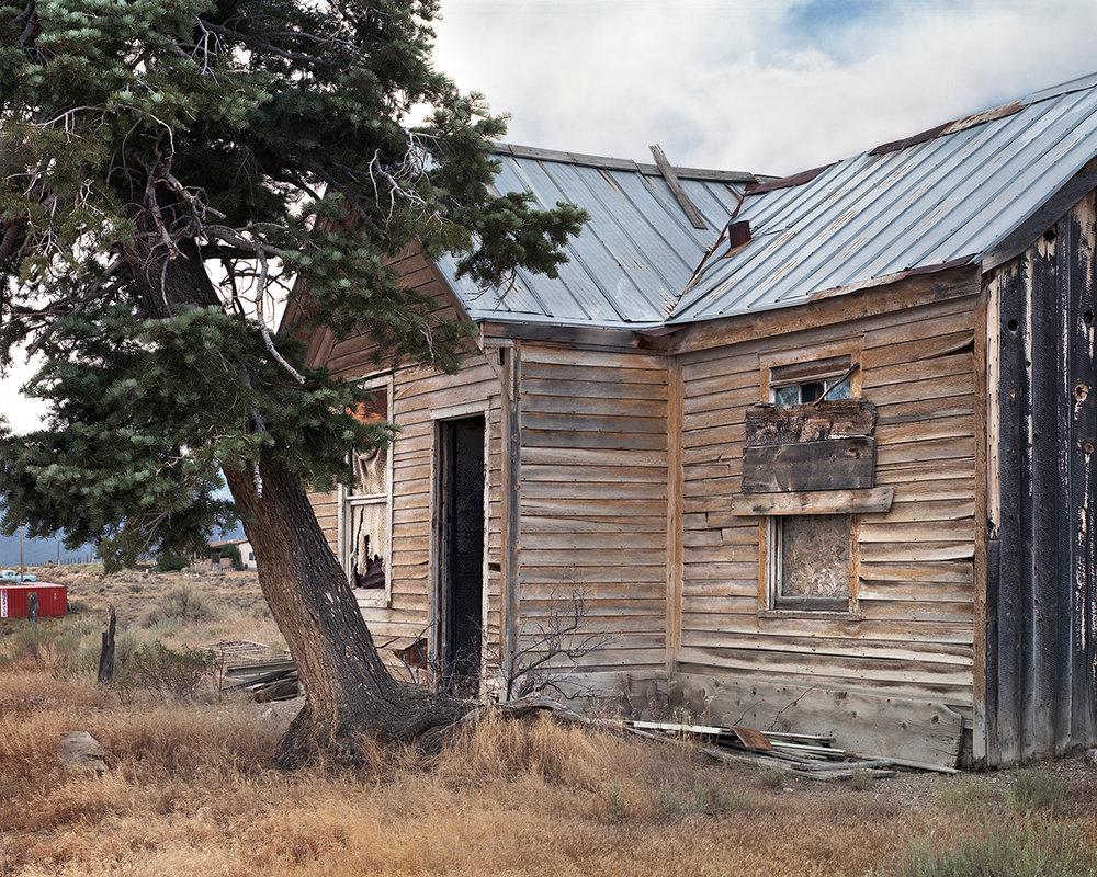 Douglas Fir, Cherry Creek, Nevada, 2017