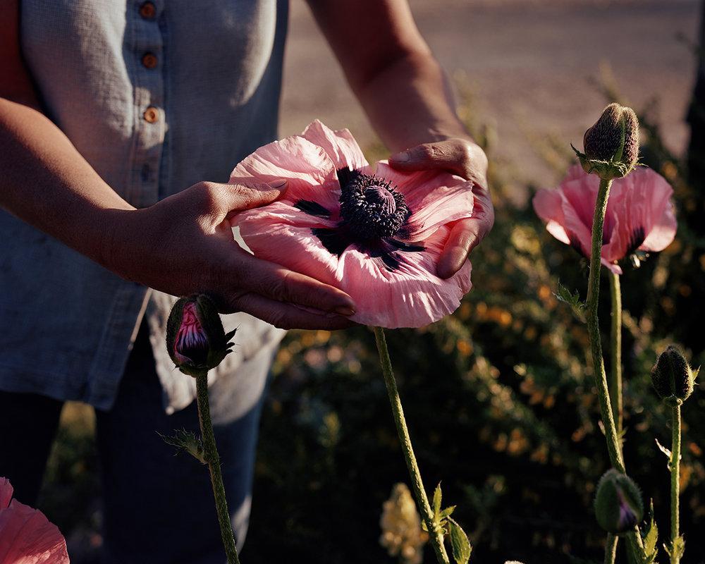 Poppy, Custer County, Idaho, 2004