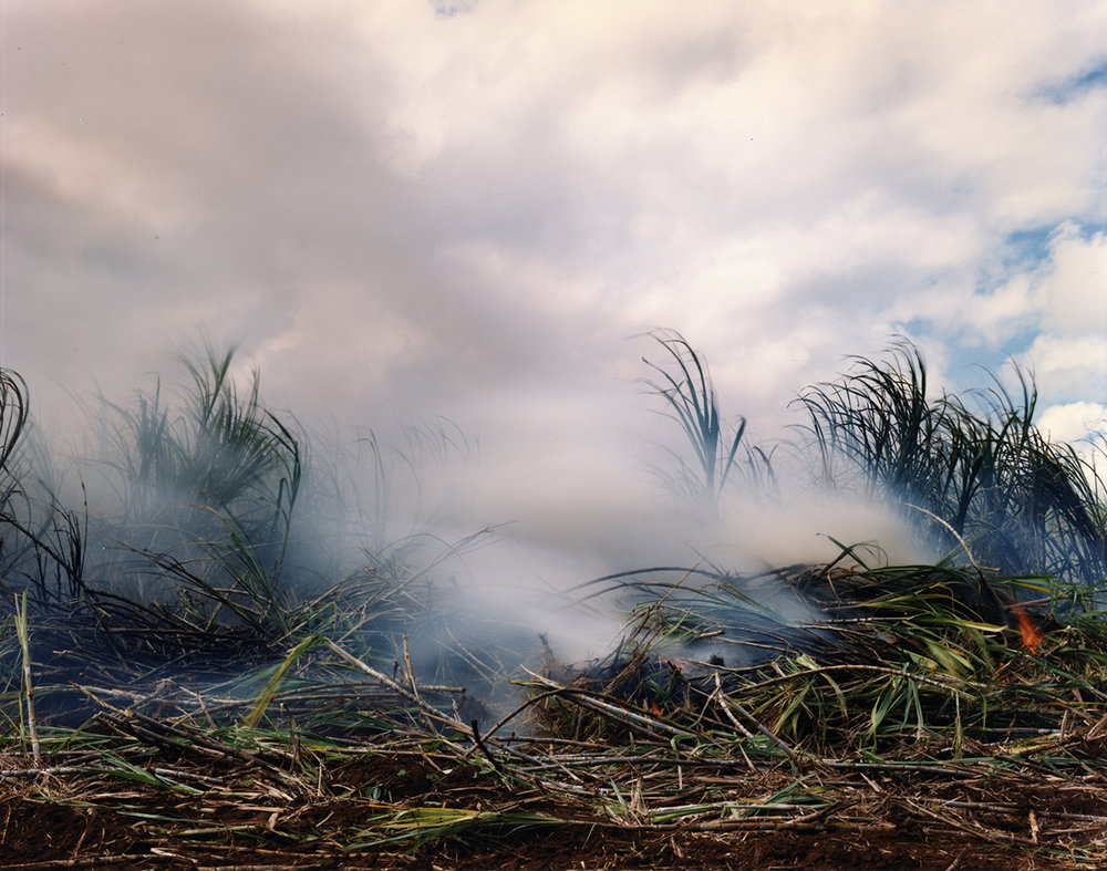 Sugar cane burning before harvest, Puhi, Kaua'i, 1991