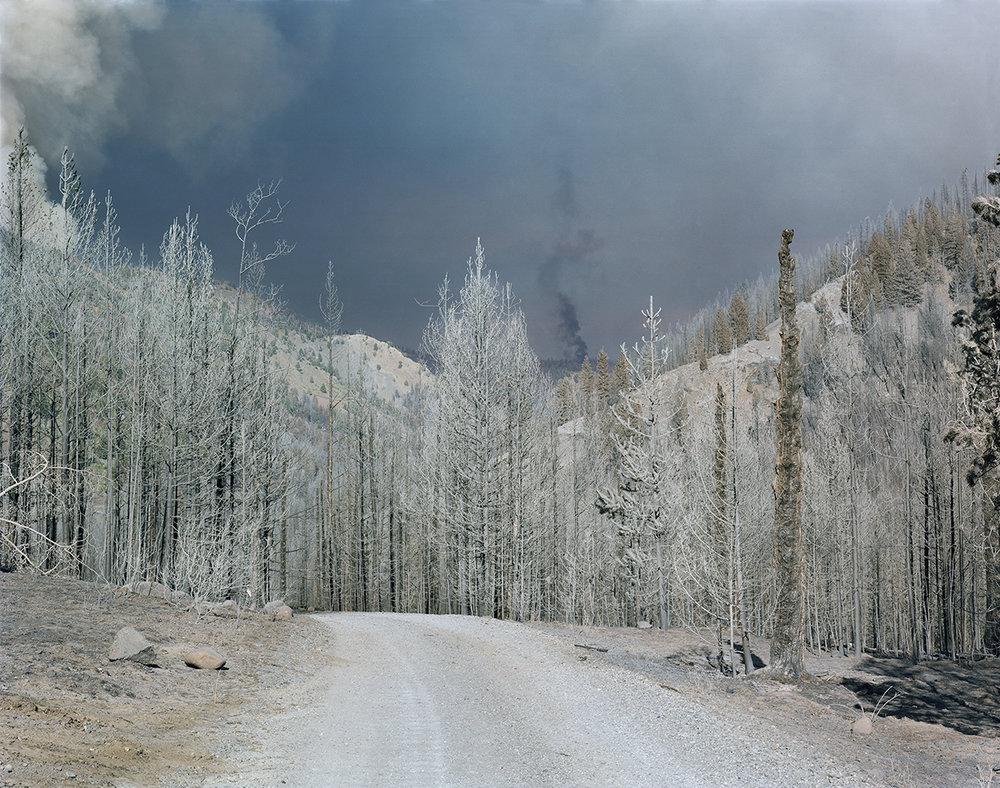 Mcphee-Burned Timber-3676v2_work v2.jpg