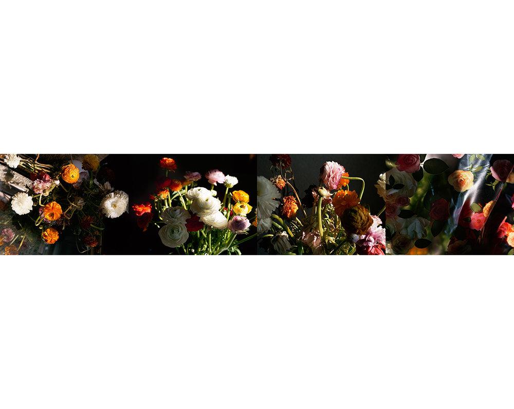 Ranunculus copy copy.jpg