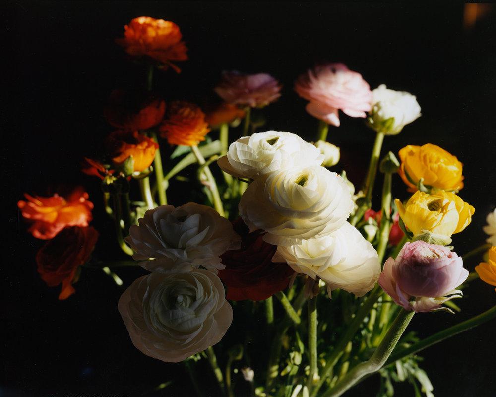4430_Flowers_4 copy.jpg