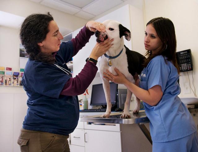 Zimra, veterinarian - Alan Orling, 2012, © Alan Orling