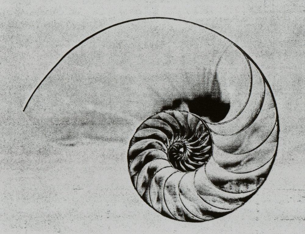 Nautilus_Shell.jpg