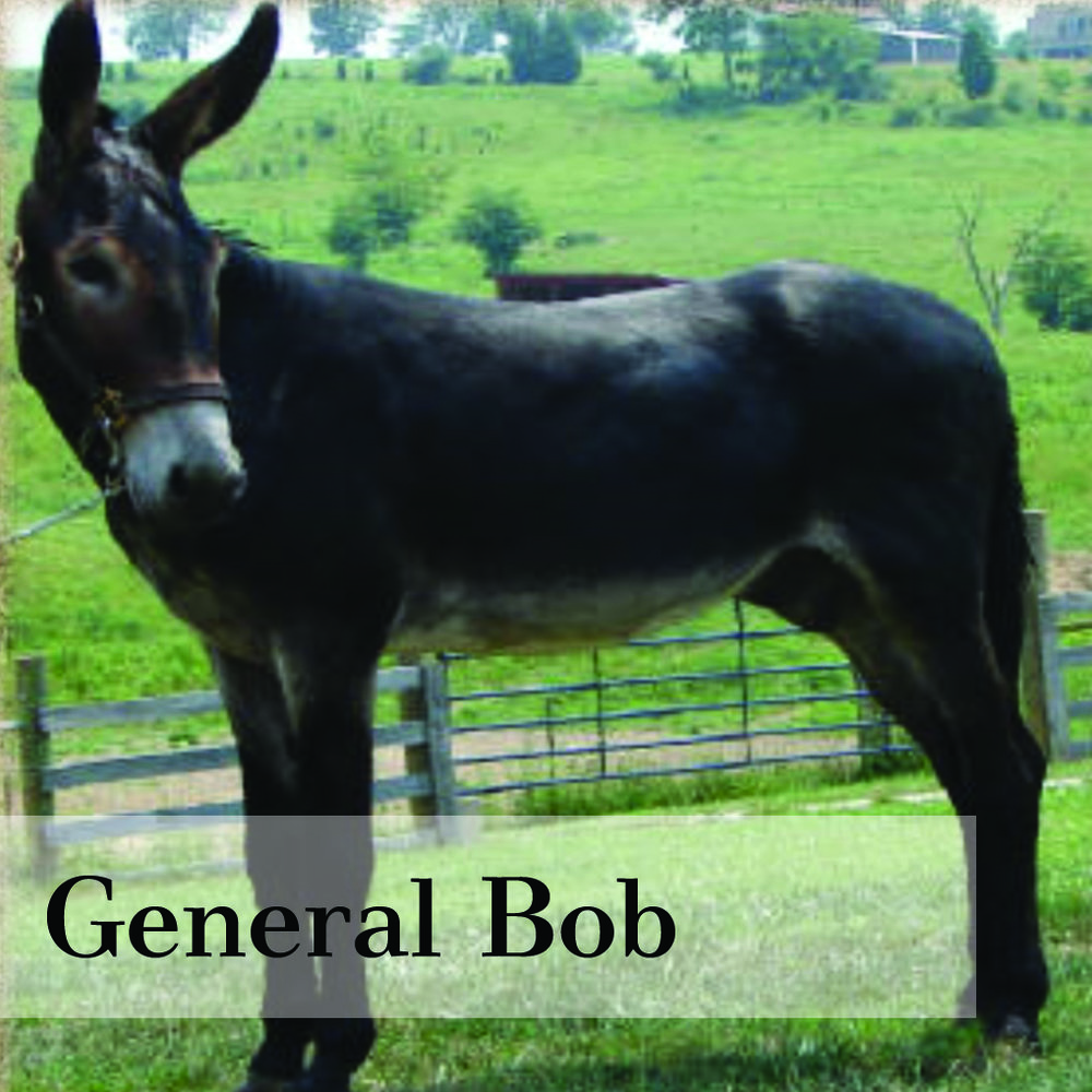 generalbob.jpg