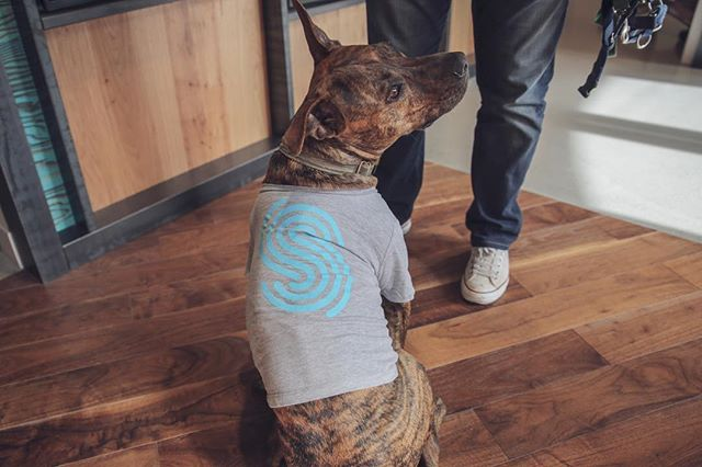 We couldn't resist the opportunity to share some of our furriest friends on #NationalPetDay. With pet-friendly offices in Austin and Omaha, Spreetail is home to some of the best four-legged pals in the biz! #wearespreetail