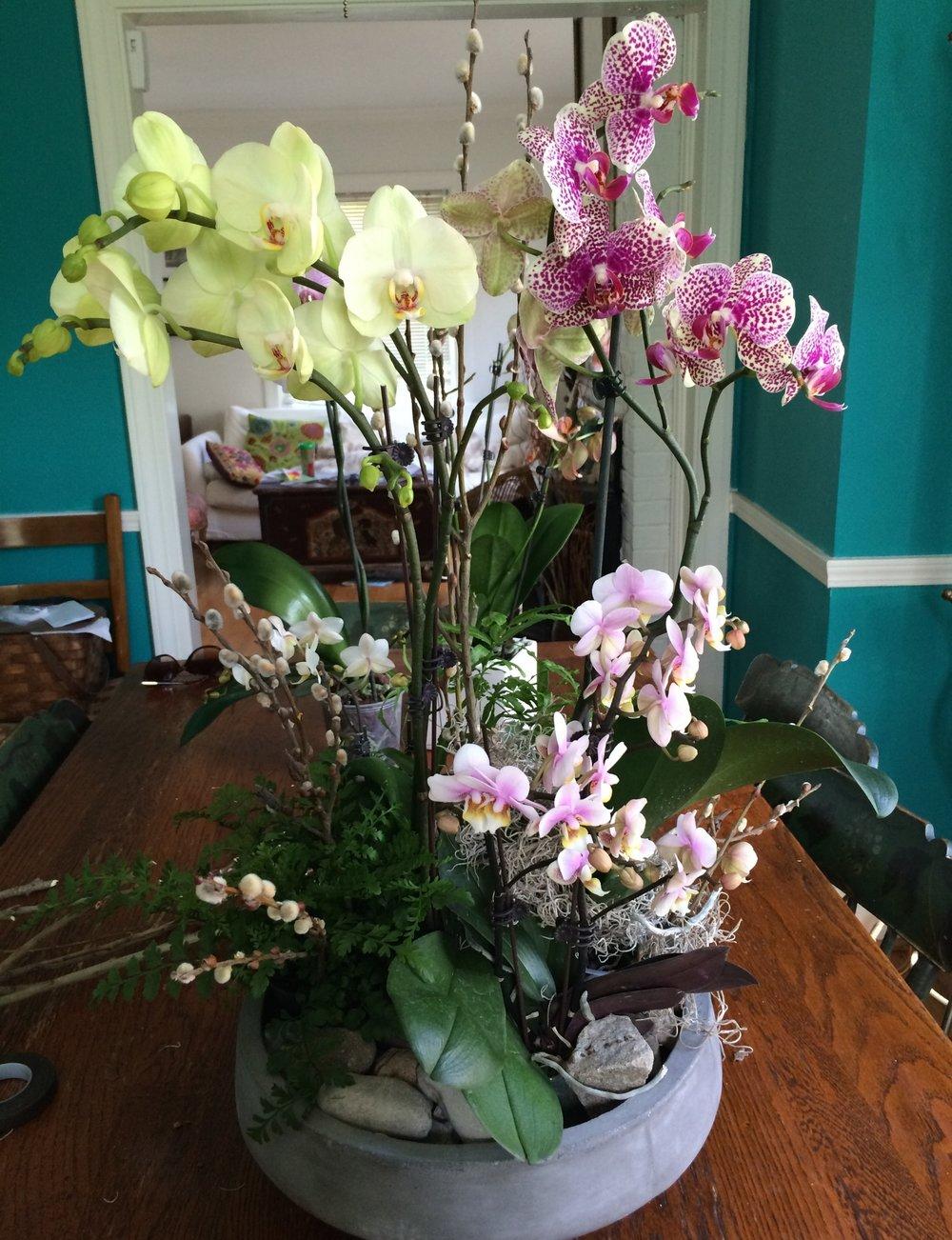 Flowers_Gift_Plant.jpg