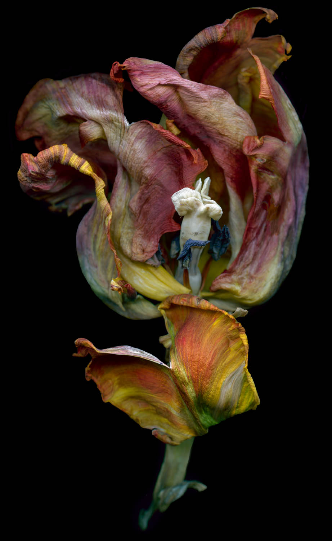 Dancing Tulip_Flat.jpg
