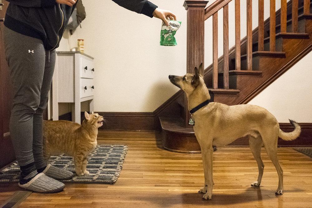 friendcat03.jpg