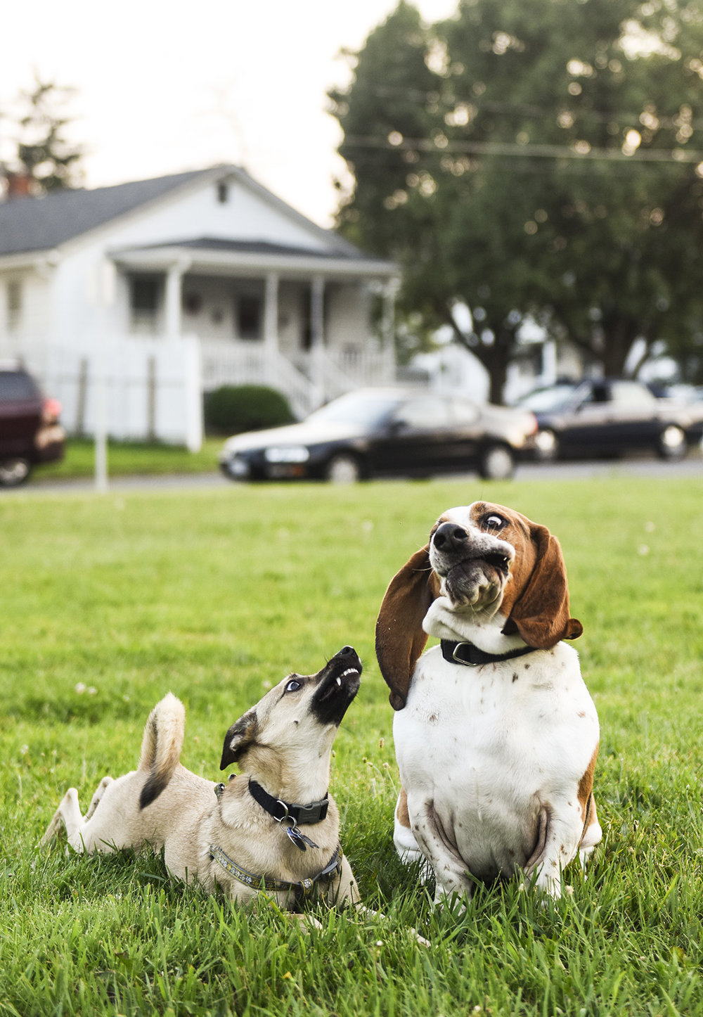 frienddog01.jpg
