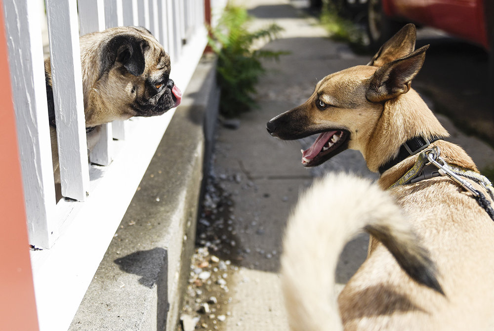 frienddog02.jpg