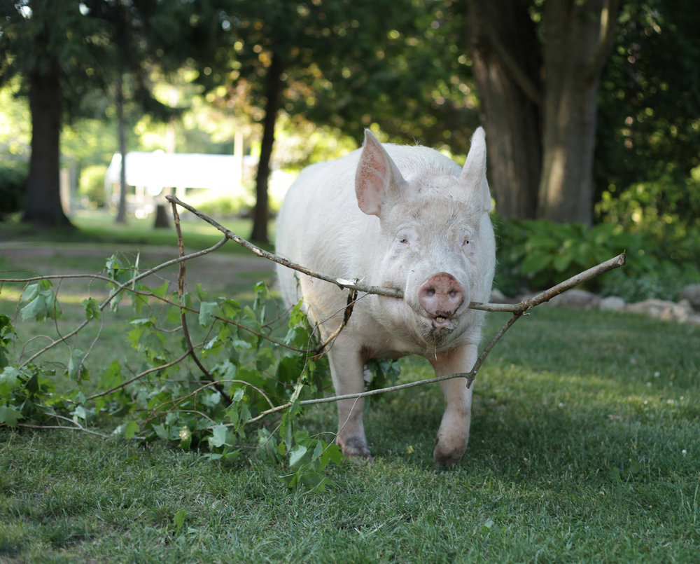 Esther helping us clear some brush.