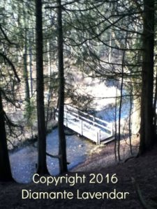 view-of-bridge-through-forest-trees-pic-with-copyright-on-it