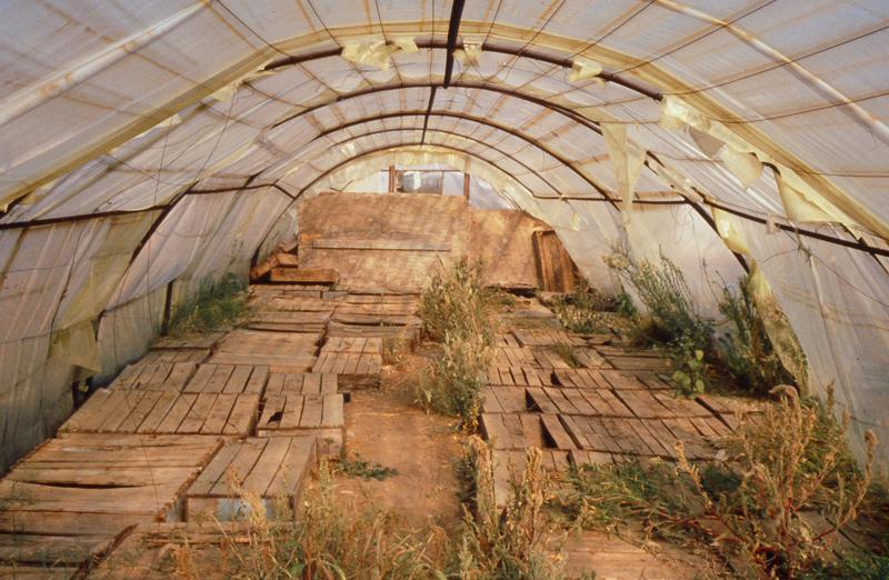 greenhouses7.jpg