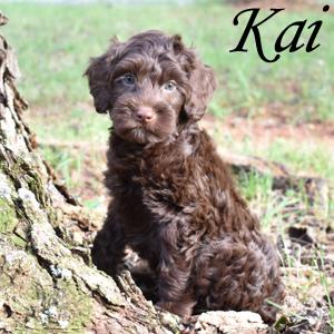 Kai - SOLD