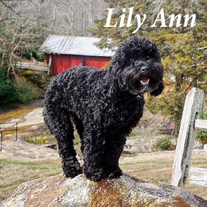 LilyAnn.jpg