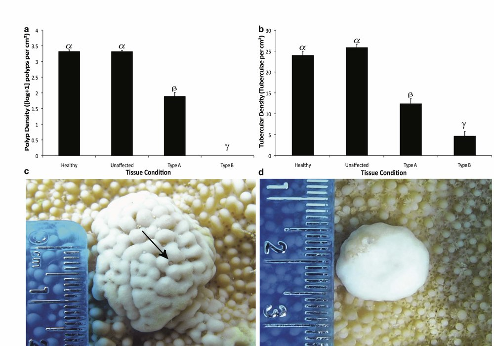 Morphological characterization of coral disease lesions