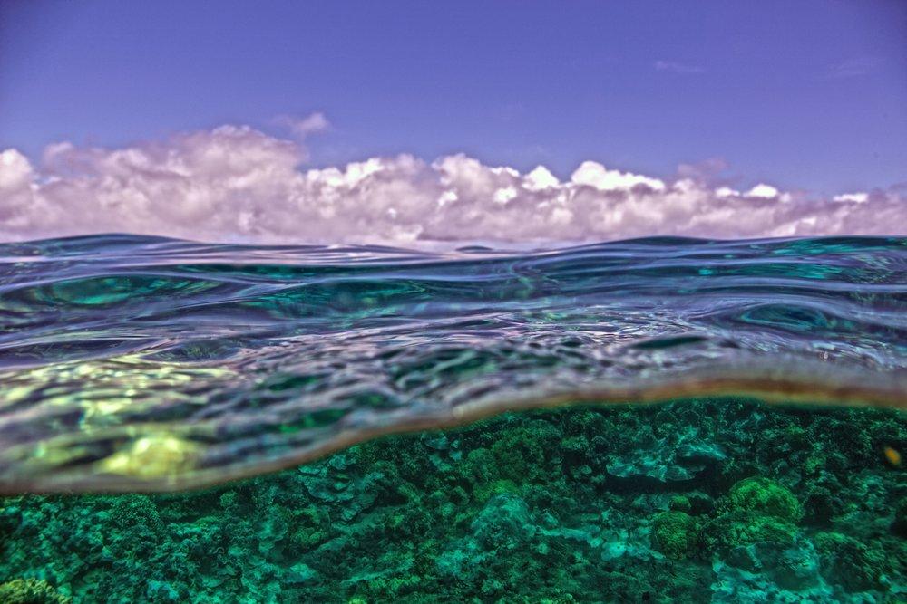 Waiopae_over_under_blue_sky_bleach_coral.jpg