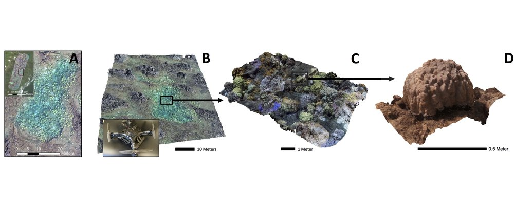Multi-scale 3D reconstructions of coral reefs