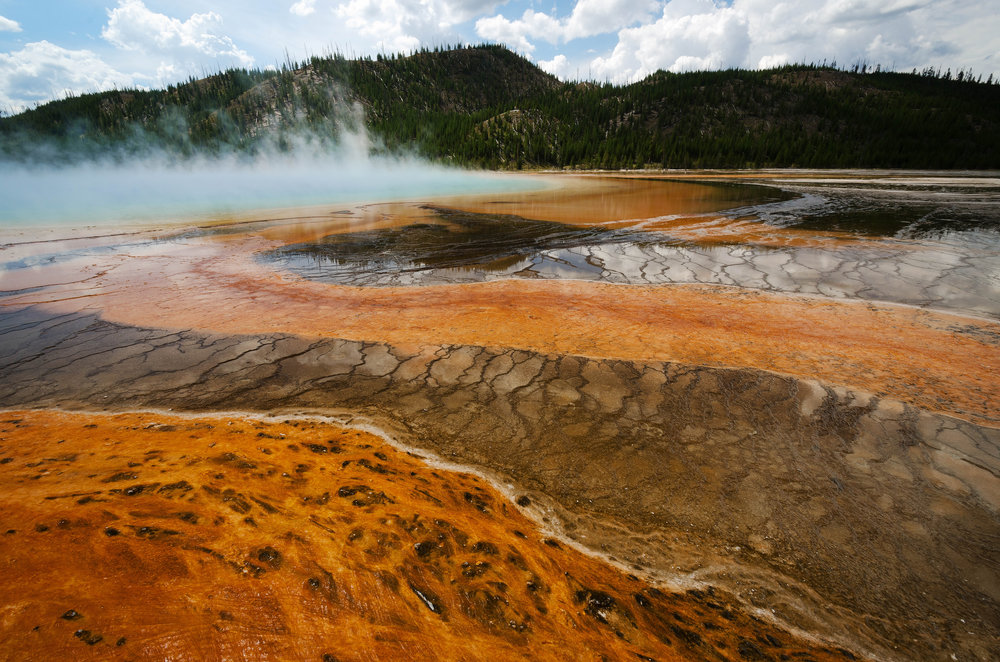 Orange Bacterial Thermophiles -