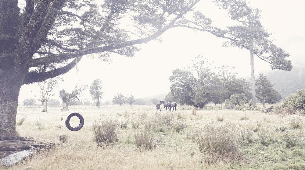 18_Horsetree.jpg