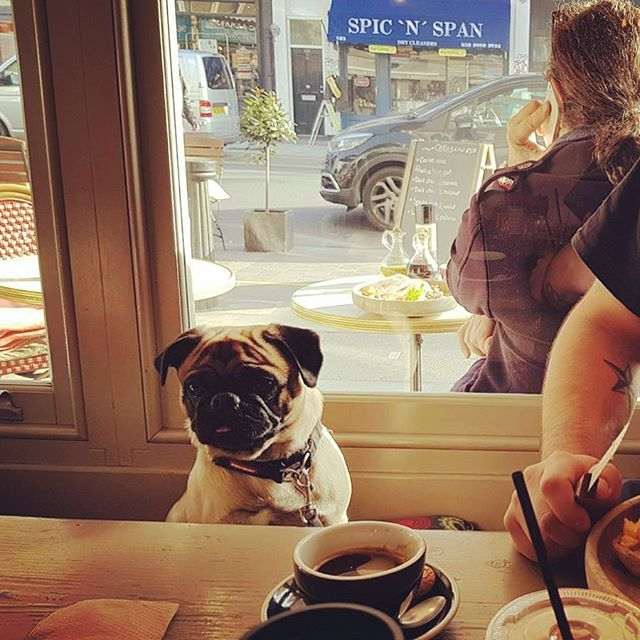 Favourite customer today mr Cesar #foodie #notinghill #mondaymotivation #summer #portobello #rain #sunday #lunch #brunch #dogsofinstagram