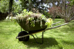 Wheelbarrow With weeds in it