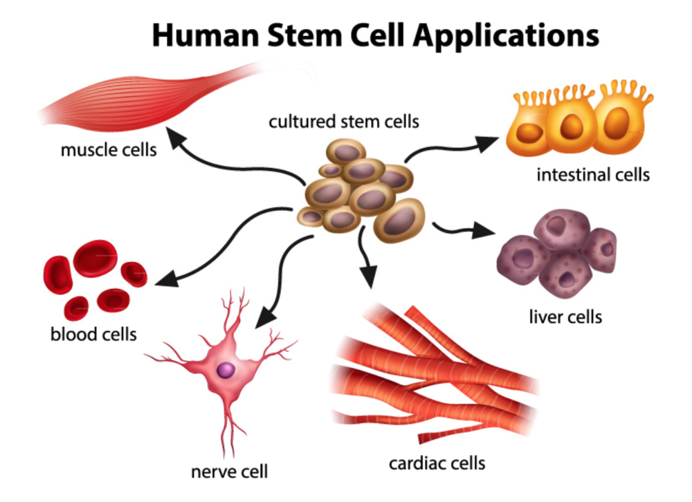 abawi-fit-stem-cell-treatment-can-be-a-better-option-than-surgery.png