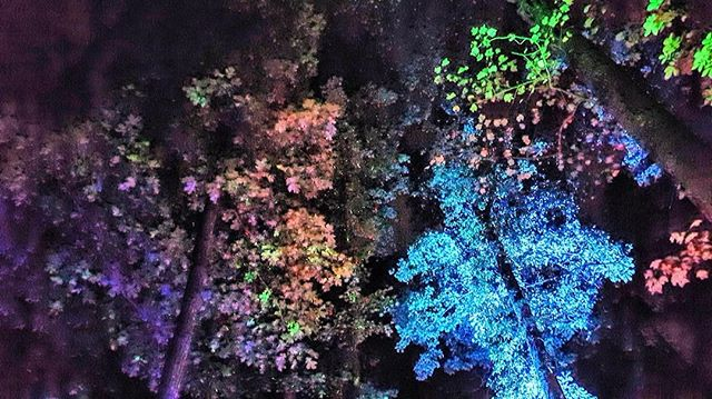 Traveling through color at Dimensions of Being x @spcbtwn Biology Afterhours in the woods | Atlanta  Stay tuned... #techno #house #art #conscoiusness #exploration  Photography by @gabo_cquera_