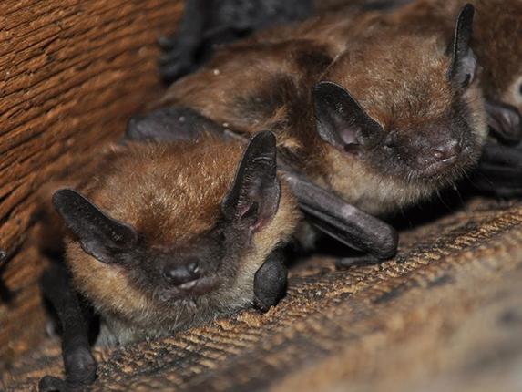 Two-Bats.jpg