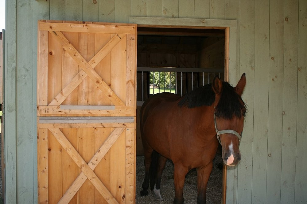 Paul Freeman - Reeve Horse in Door.jpg