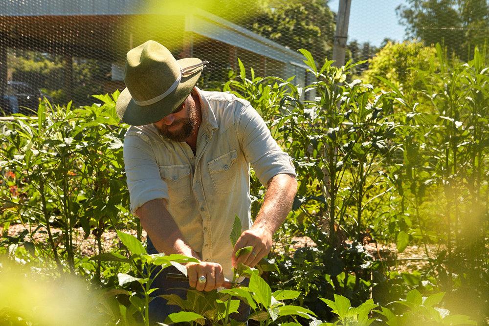 Copy of Jubilee Organics - Rob Christian Crosby Photographer 31.jpg
