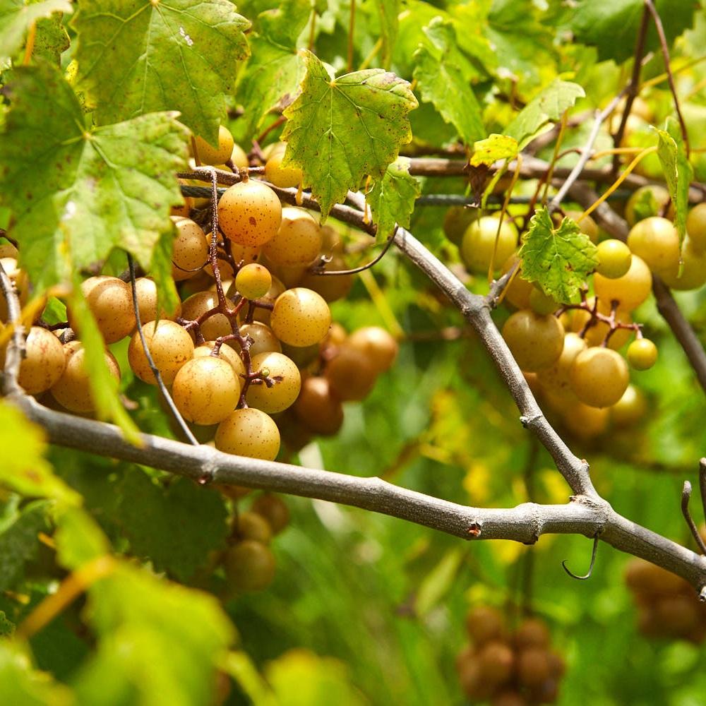 Copy of Jubilee Organics - Rob Christian Crosby Photographer 38.jpg
