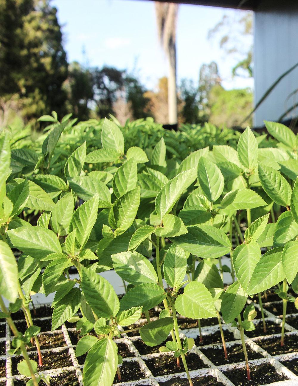 Plant Power -