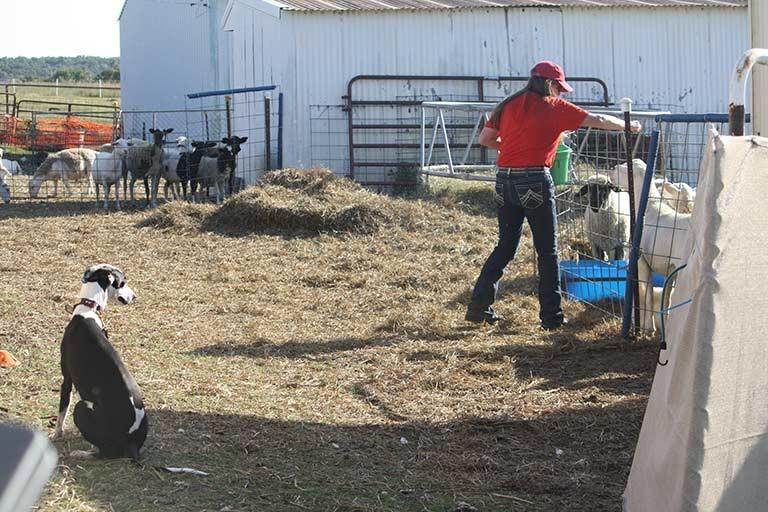 Farm Dog.jpg