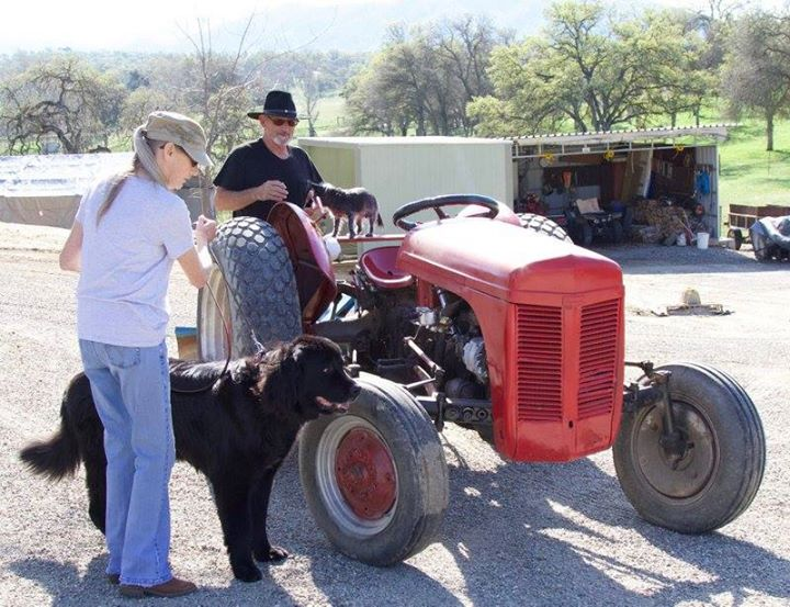 Farm Dog Fair.jpg