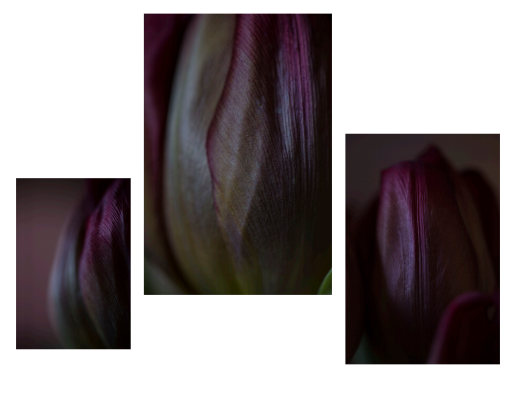 tulip play 4.PNG
