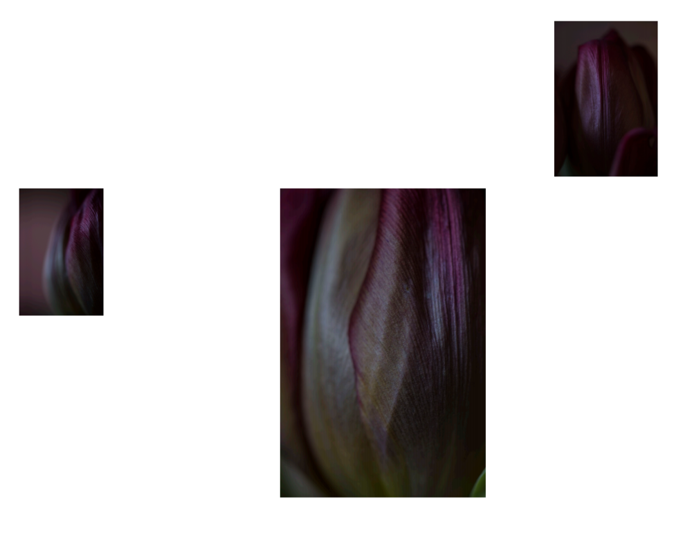 tulip mess about.PNG