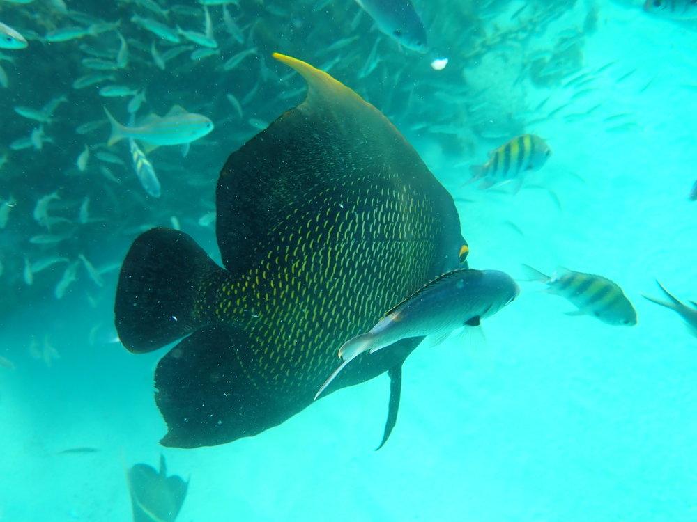 closeupfish.JPG
