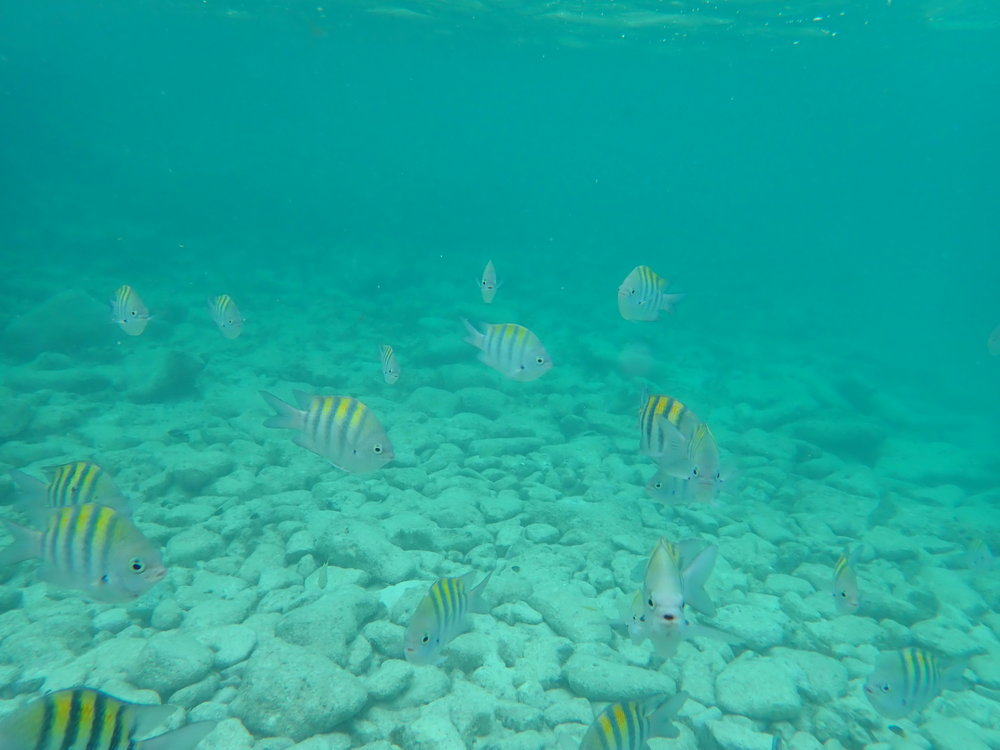 underwaterschoolyellow.JPG