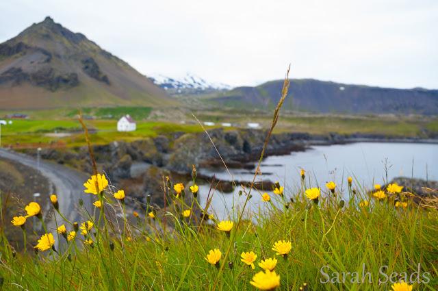 2016_07_Iceland_Web_SS-156.jpg