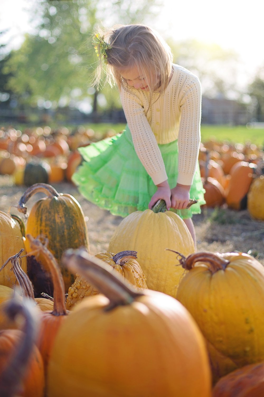 pumpkins-2878159_1920.jpg