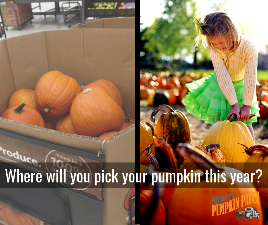 Where will you pick your pumpkin_.jpg